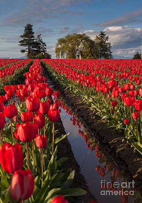 Festival Photograph - Skagit Glorious Day by Mike Reid