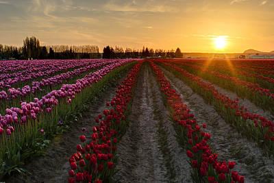 Photograph - Skagit Golden Sunrays by Mike Reid