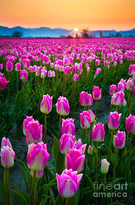 Skagit Photograph - Skagit Valley Dawn by Inge Johnsson