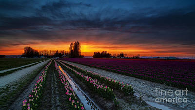 Photograph - Skagit Valley Dusk Colors by Mike Reid