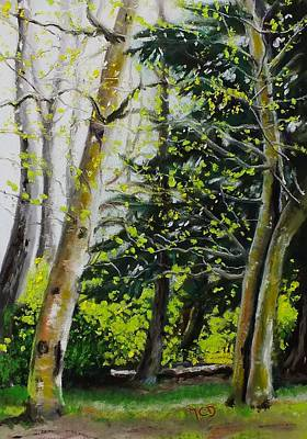 Skagit Valley Forest Art Print by Marie-Claire Dole