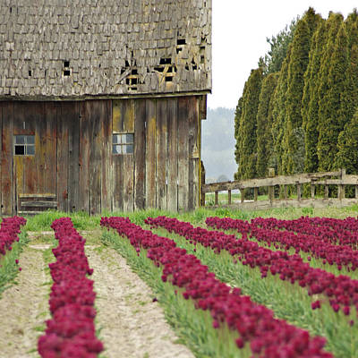 Photograph - Skagit Valley by Kjirsten Collier