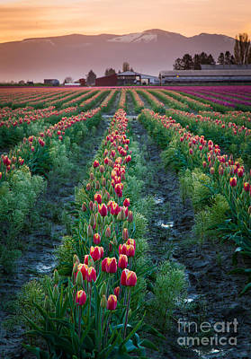 Skagit Valley Magic Art Print by Inge Johnsson