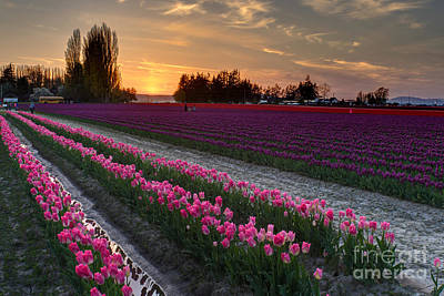 Photograph - Skagit Valley Serenity by Mike Reid