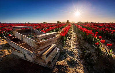 Rows Photograph - Skagit Valley Tulip Festival by Alexis Birkill