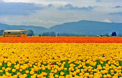 Photograph - Skagit Valley Tulip Field by Peggy Collins