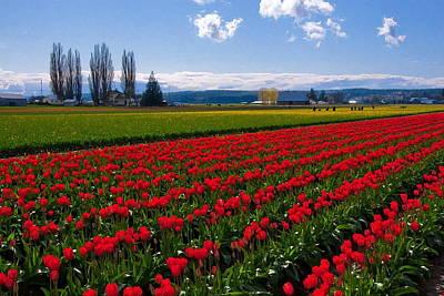 Skagit Digital Art - Skagit Valley Tulips by Doug Oriard