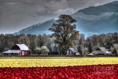Photograph - Skagit Valley Tulips by Sylvia Blaauw