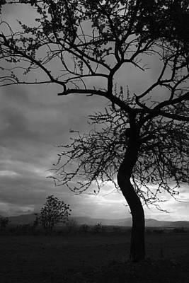 Classic Golf - SKC 1722 Tree within a Tree by Sunil Kapadia
