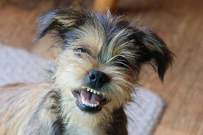Photograph - Skeeter - Happy Puppy by Tom Culver