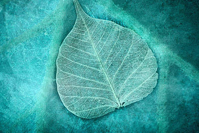 Skeletal Leaf Art Print