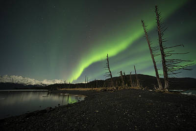 Northern Lights Photograph - Skeletal Remains by Ted Raynor