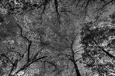 Skeletal Sky Art Print
