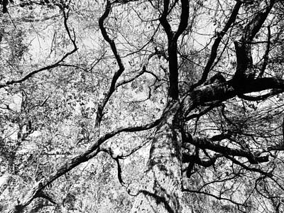 Photograph - Skeletal Tree Top by Grace Dillon