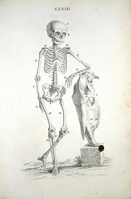 The Human Body Photograph - Skeleton by British Library