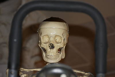 Photograph - Skeleton In A Museum by Vadim Levin