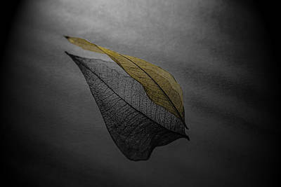 Skeleton Leaf 4716 Art Print