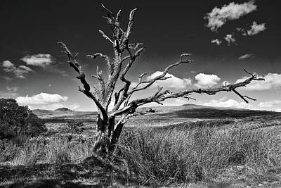 Photograph - Skeleton Of A Dead Tree On Dartmoor by Richie Johns