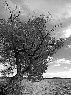 Contemplation Photograph - Skeleton Tree by Soul Full Sanctuary Photography