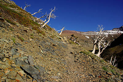 Photograph - Skeleton Trees On Scenic Point Trail by Daniel Woodrum