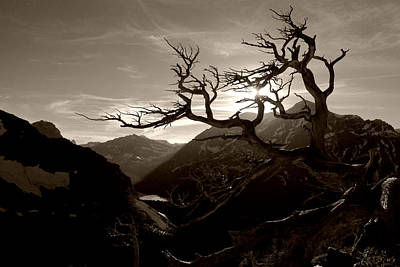 Photograph - Skeleton Trees On Scenic Point Trail No.2 by Daniel Woodrum