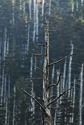 Photograph - Skeletons Of Clingman's Dome by Andy Crawford