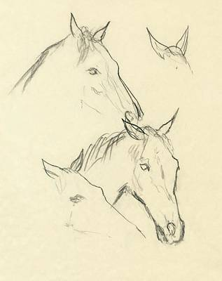 Oscar Digital Art - Sketch Of A Horse Head by Carl Oscar August Erickson