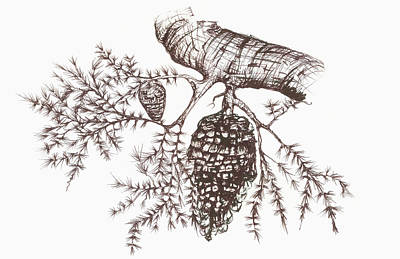Color Image Drawing - Sketch Of A Pine Cone Hanging by Vern Hoffman