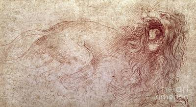 Fine Drawing - Sketch Of A Roaring Lion by Leonardo Da Vinci