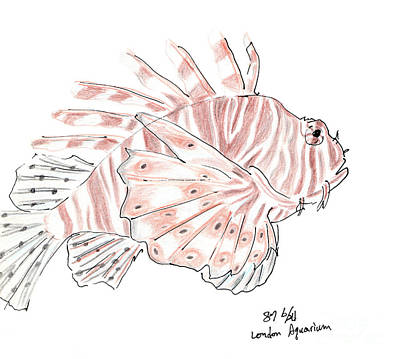 Art Print featuring the drawing Sketch Of Lion Fish At London Aquarium by Jingfen Hwu