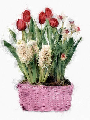 Spring Bulbs Painting - Sketch Of Red Tulips And White Hyacinths In Pink Basket by Elaine Plesser
