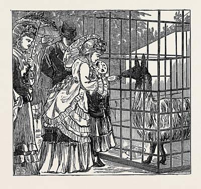 Llama Drawing - Sketches In The International Exhibition The Llama 1871 by English School