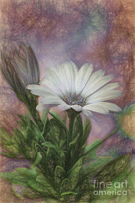 Photograph - Sketchy Daisy In Mother Of Pearl by Lois Bryan