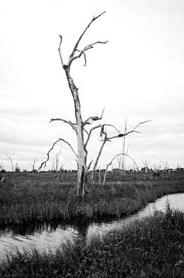 Sunset Photograph - Skeleton Of The Louisiana Coast by Andy Crawford
