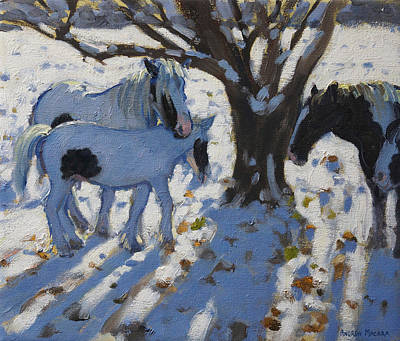 Skewbald Ponies In Winter Print by Andrew Macara