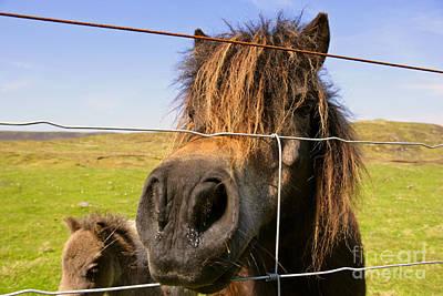 Photograph - Skewbald Shetland Pony by Steffen and Alexandra Sailer