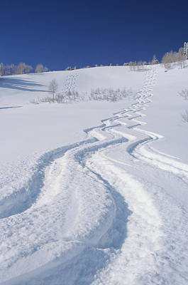 Ski Photograph - Ski Tracks In Silver Fork, Big by Howie Garber