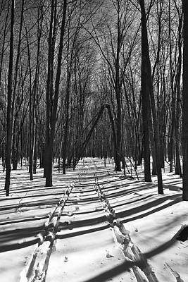 Photograph - Ski Trail - Arboretum - Madison - Wi by Steven Ralser