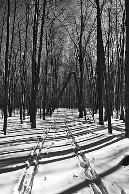 Arboretum Photograph - Ski Trail - Arboretum - Madison - Wi by Steven Ralser