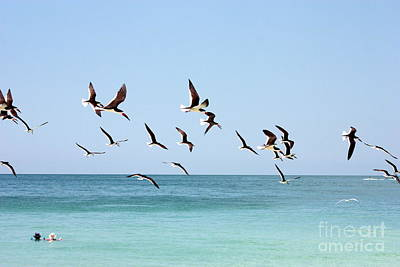 Black Skimmers Photograph - Skimmers And Swimmers by Carol Groenen