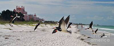 Photograph - Black Skimmers At Don Cesar by George D Gordon III