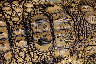 Skin Of A Young Nile Crocodile Art Print