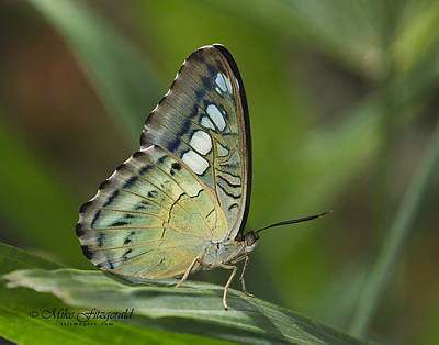 Photograph - Skipper Bottom by Mike Fitzgerald
