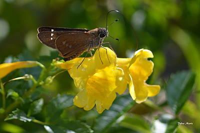 Art Print featuring the photograph Skipper Butterfly 2 by Debra Martz