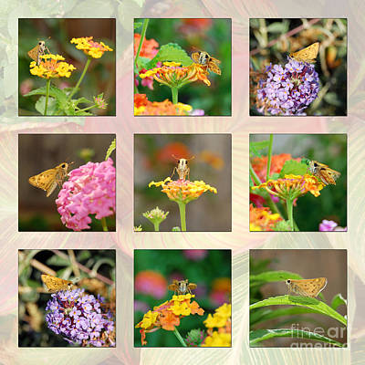 Photograph - Skipper Butterfly Collage by Debra Thompson