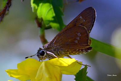 Art Print featuring the photograph Skipper Butterfly by Debra Martz