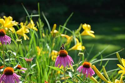 Photograph - Skipper In The Flowers by Kristin Hatt