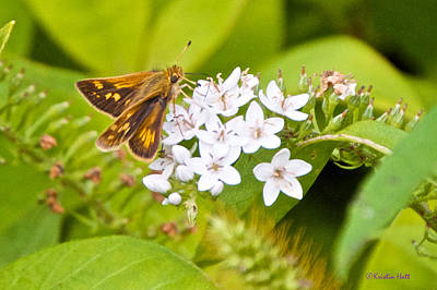 Photograph - Skipper by Kristin Hatt