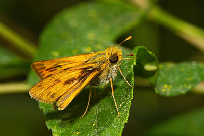 Photograph - Skipper by Mike Farslow