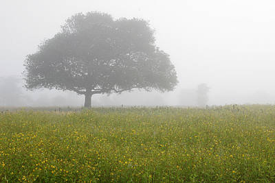 Skc 0056 Tree In Fog Art Print by Sunil Kapadia